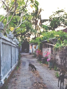 Stray dogs in Canggu Bali