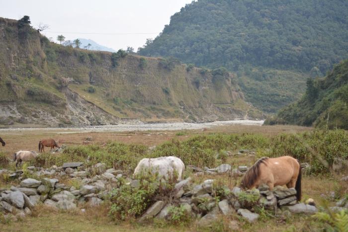 Horses in Hemja